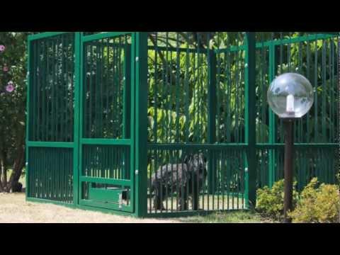 Dante recinto per cani presentazione youtube - Recinto mobile per cani ...