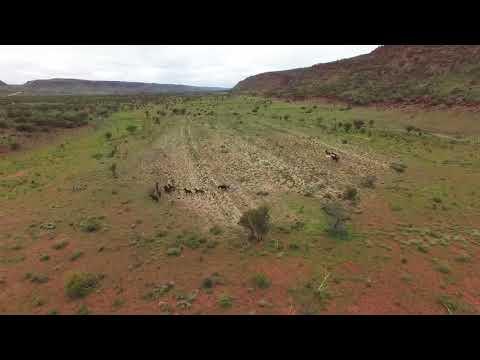 Australian Horse Adventures Brumby Tour