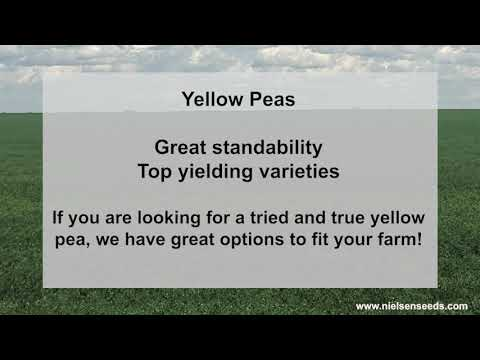 We  have limited qty's of yellow peas available. Let us know if we can help!