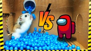 🐹Cute Hamster pets AMONG US but with Traps in maze