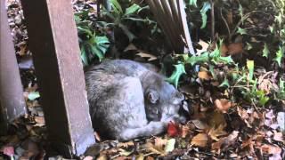 Artist: Shonen Knife Album: Rock Animals Track 5. Catnip Dream A tr...