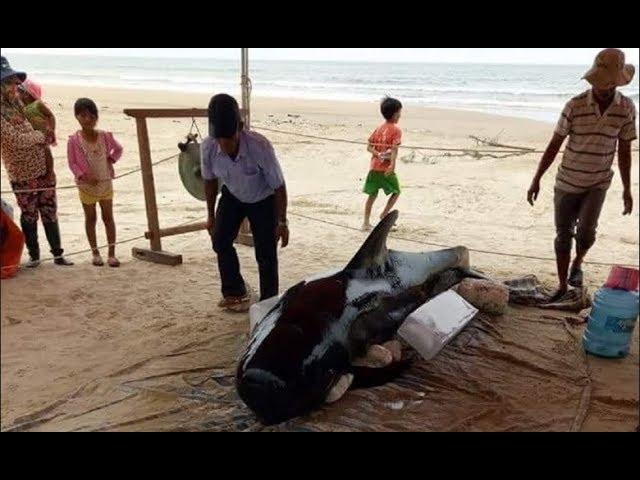 Cá v/o/i nặng hơn 400kg lại trôi dạt vào bờ biển Quảng Ngãi