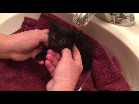 Rescued Sick Kitten's Update and Treatment! Her Name is Tulip :)