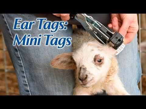 Ear Tags: Mini Tags