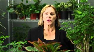 How to Protect Tropical Plants in Winter : Gardening & Plant Care