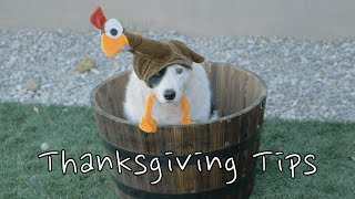Dog Safety Tips For Thanksgiving Holiday