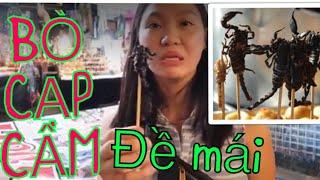 Vlog 856 ll Qua Thái Lan Ăn BÒ CẠP, ĐUÔNG DỪA, DẾ, CHÂU CHẤU, Sầu Riêng Và Ôm Nhà Vệ Sinh Cả Đêm