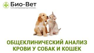 Общеклинический анализ крови у собак и кошек. Ветеринарная клиника Био-Вет.