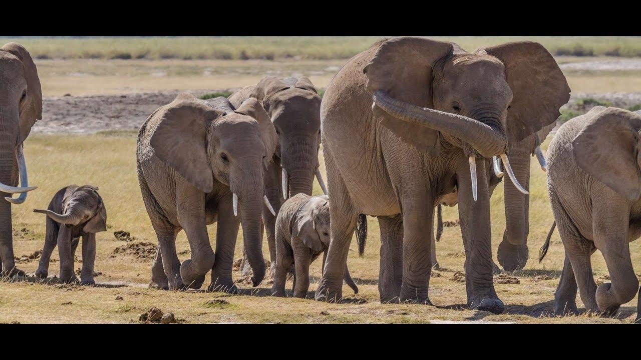 Botswana Safari | Everything to know | Discover Africa Safaris