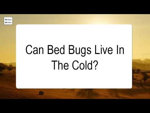 Can Bed Bugs Live In The Cold
