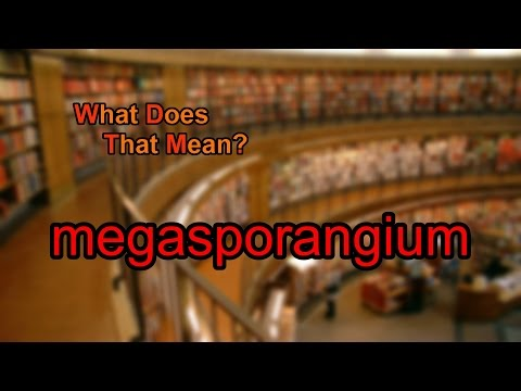 What does megasporangium mean?