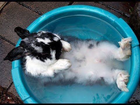 Can bunnies take baths