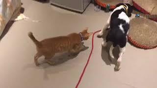 Video Adopt Mary's Doggies - Cara good with cats download MP3, 3GP, MP4, WEBM, AVI, FLV Oktober 2018