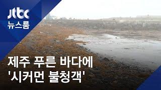 제주바다 불청객 '괭생이모자반'…비료로 '효자' 되나 / JTBC 뉴스룸