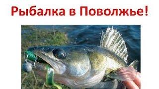 Рыбалка в Поволожье. Рыбалка в Поволожье с Алексеем Чернушенко.