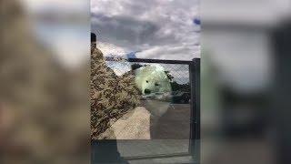 В Рязани неправильно припаркованное авто эвакуировали вместе с оставшейся в салоне собакой
