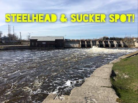 Alpena Michigan Dam | Steelhead & Suckers!