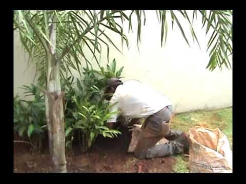 Jardim sousa jardinagem e paisagismo youtube for Paisagismo e jardinagem