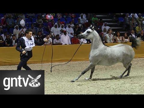 The most beautiful horses at the Dubai International Horse Fair