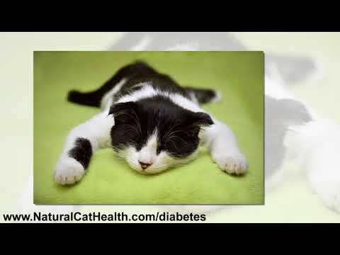 diabetes-mellitus-in-cats-and-natural-solutions