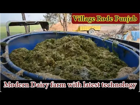 Modern Dairy farm with latest technology at village Rode Punjab