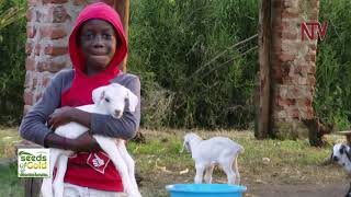 Managing goats for profits | SEEDS OF GOLD