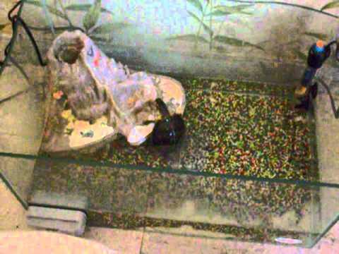 Tartaruga d acqua dolce ughino l 39 levoluzione youtube for Tartaruga acqua dolce razze