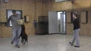 Kalamazoo Dog Training - In Home Dog Trainer - Kalamazoo Mi