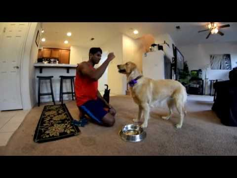 how-to-stop-puppy-food-aggression