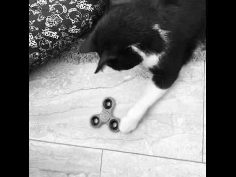 Fidget spinner for cats #fidgetspinner #fidget #spinner #cat #crazycat