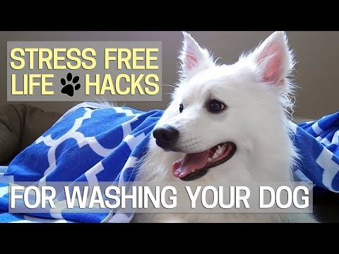 Best Way How to Wash Your Dog - Stress Free 🐶