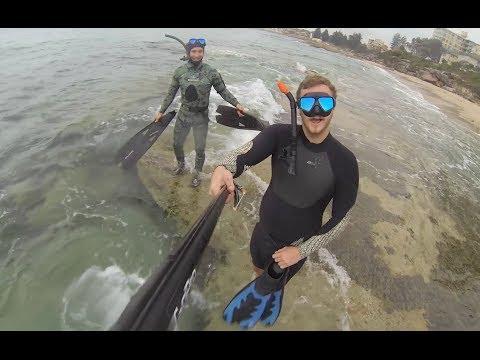 Spearfishing Shark Island Sydney