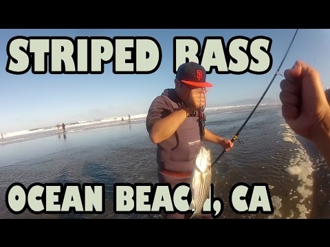 How to catch and How not to catch Striped Bass @ Ocean Beach SF ft More Than Fishing