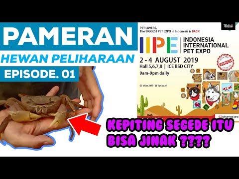 PAMERAN HEWAN PELIHARAAN DI IIPE 2019   Episode. 01
