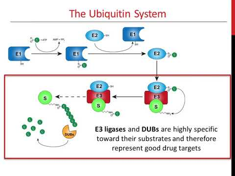 timsTOF Pro and PASEF: Multiplying Sequencing Speed and Sensitivity in Proteomicsиз YouTube · Длительность: 1 час1 мин51 с