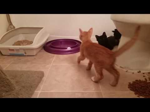 Foster Kitten Rescue Adoption Saturday **New Fosters Come home*!!