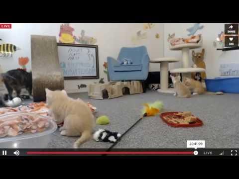 Tiny Kittens Shellys late night visit