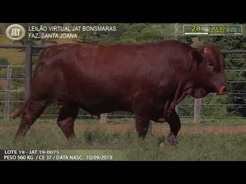 LOTE 019