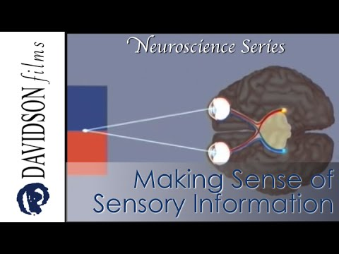 Making Sense of Sensory Information (Davidson Films, Inc.)
