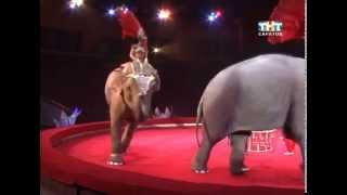 На саратовском манеже индийские слоны