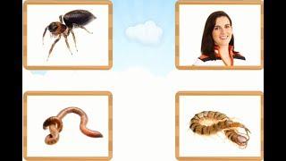 Bài 19. Côn trùng và động vật nhỏ bé || Bé học côn trùng