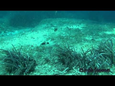 Under the Adriatic sea (Vela Luka)
