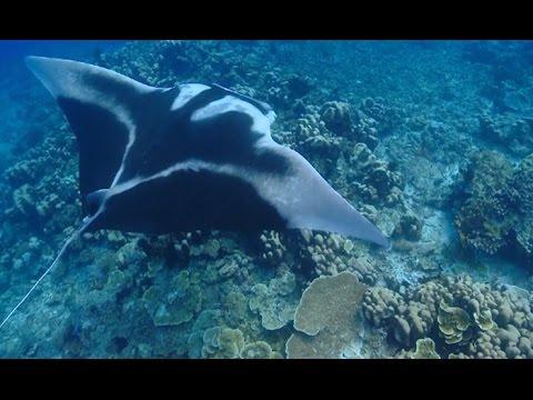 Sharks, Skates And Rays
