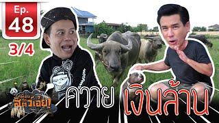 ควายไทยเงินล้าน - เพื่อนรักสัตว์เอ้ย EP 48 (3/4)