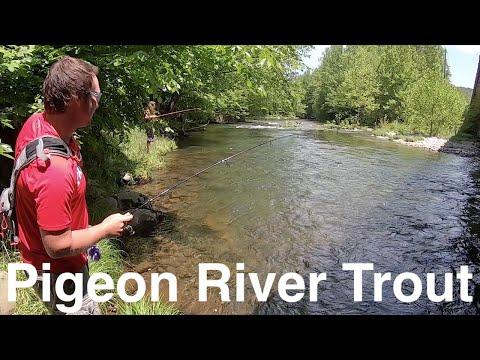 Trout Fishing Tennessee's Little Pigeon River