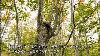 福島県森林文化記録映像【第21章 あがりこ】