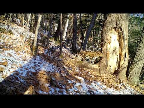 Леопард (часть 2)