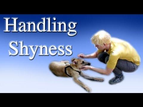Handling Shyness - Clicker Dog Training