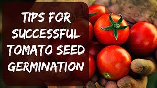 How To Plant Tomato Seeds Indoors - Tips For Fast Growth - Start Your Own Vegetable Garden