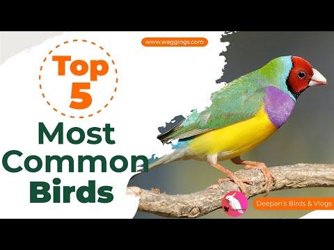 Download Deepan Exotic Bird Breeder MP3, MKV, MP4 - Youtube to MP3